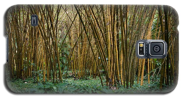 Bamboo Grove Galaxy S5 Case
