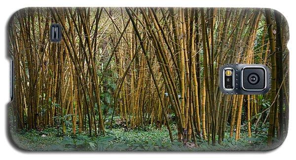 Bamboo Grove Galaxy S5 Case