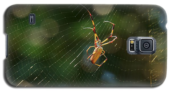 Banana Spider In Web Galaxy S5 Case