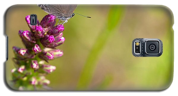 Banded Hairstreak Butterfly Galaxy S5 Case