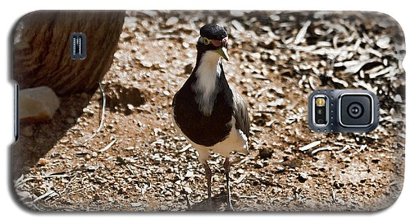 Banded Lapwing Galaxy S5 Case