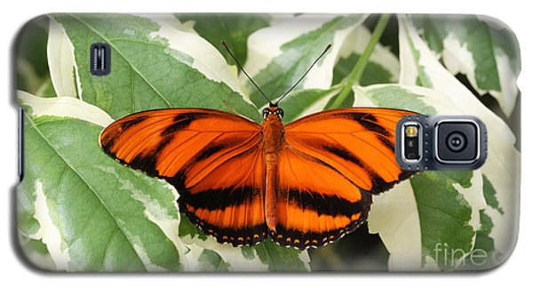 Banded Orange Longwing Butterfly Galaxy S5 Case by Judy Whitton