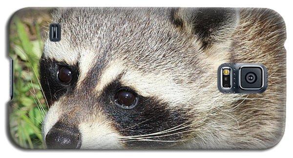 Bandit Galaxy S5 Case by Tiffany Erdman