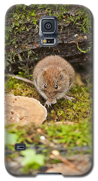 Galaxy S5 Case featuring the photograph Bank Vole by Paul Scoullar