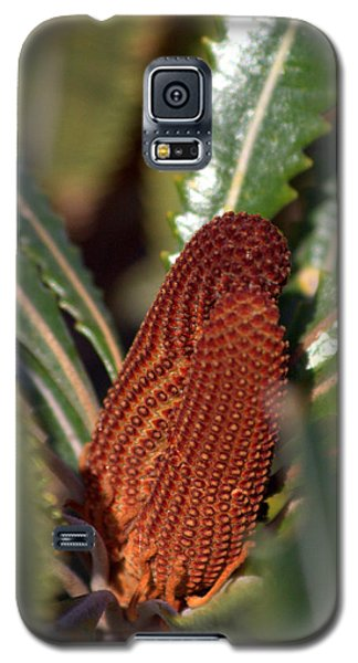 Galaxy S5 Case featuring the photograph Banksia by Miroslava Jurcik