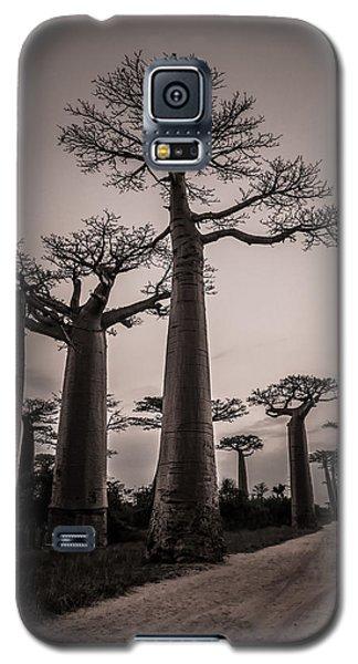 Baobab Avenue Galaxy S5 Case