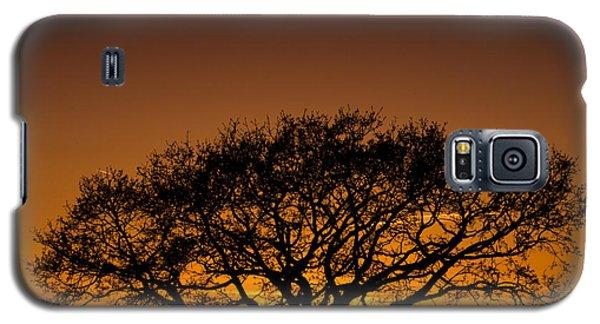 Baobab Galaxy S5 Case