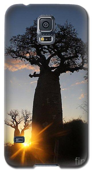 baobab from Madagascar 6 Galaxy S5 Case by Rudi Prott