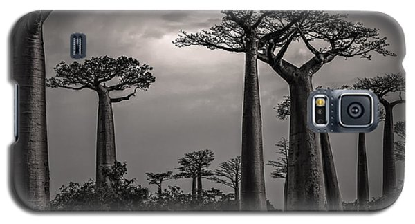 Baobab Highway Galaxy S5 Case