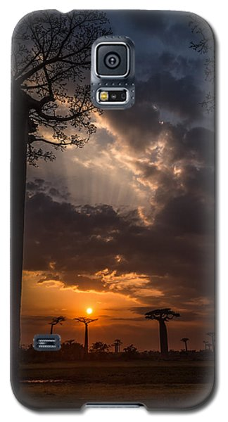 Baobab Sunrays Galaxy S5 Case by Linda Villers