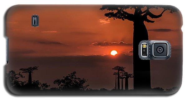 Baobab Sunrise Galaxy S5 Case
