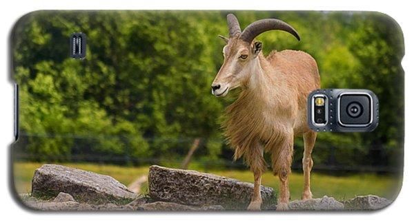 Barbary Sheep Galaxy S5 Case