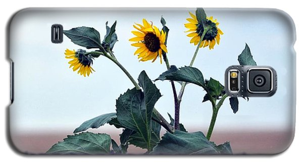 Barbed And Flowered  Galaxy S5 Case by Clarice  Lakota