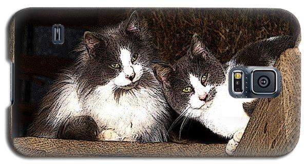 Barn Cats Galaxy S5 Case