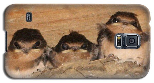 Barn Swallow Chicks 2 Galaxy S5 Case