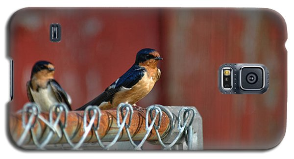 Barn Swallow Galaxy S5 Case