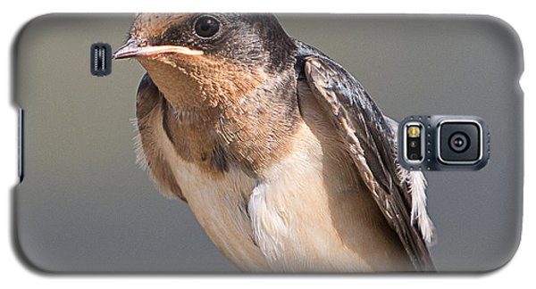 Barn Swallow On Rope I Galaxy S5 Case by Patti Deters