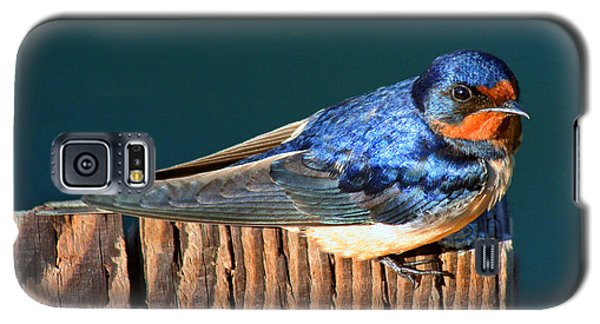 Galaxy S5 Case featuring the photograph Barn Swallow Perching by Bob and Jan Shriner