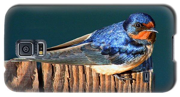 Barn Swallow Perching Galaxy S5 Case