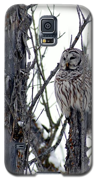 Galaxy S5 Case featuring the photograph Barred Owl 2 by Steven Clipperton