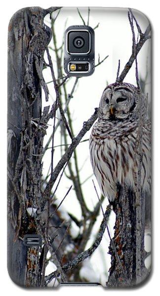 Barred Owl 2 Galaxy S5 Case