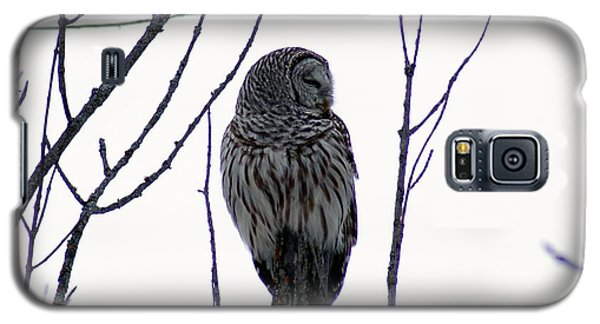 Galaxy S5 Case featuring the photograph Barred Owl 3  by Steven Clipperton