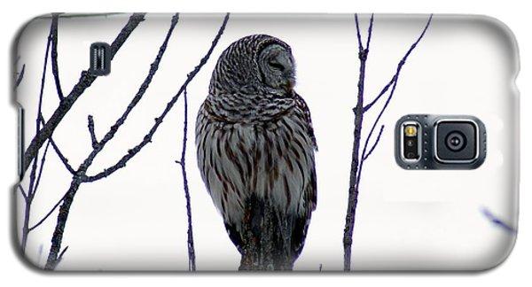 Barred Owl 3  Galaxy S5 Case