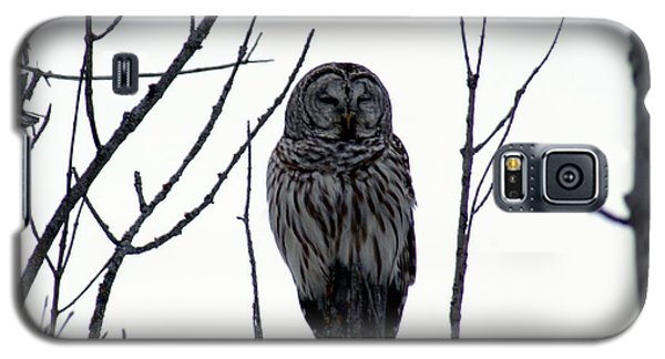Galaxy S5 Case featuring the photograph Barred Owl 4 by Steven Clipperton
