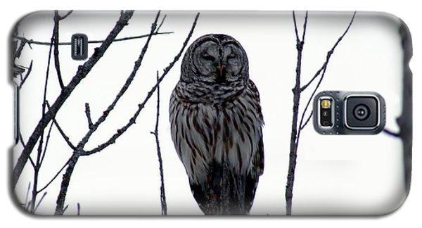 Barred Owl 4 Galaxy S5 Case