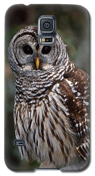 Galaxy S5 Case featuring the photograph Barred Owl by Bradford Martin