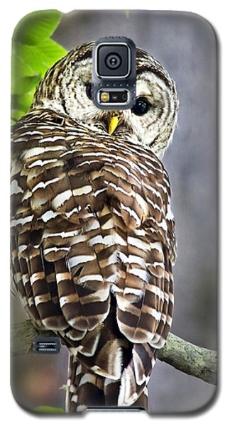 Galaxy S5 Case featuring the photograph Barred Owl by Christina Rollo