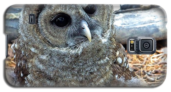 Galaxy S5 Case featuring the photograph Barred Owl by Constantine Gregory