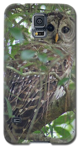 Galaxy S5 Case featuring the photograph Barred Owl by Dodie Ulery