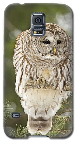 Barred Owl Hunting Galaxy S5 Case