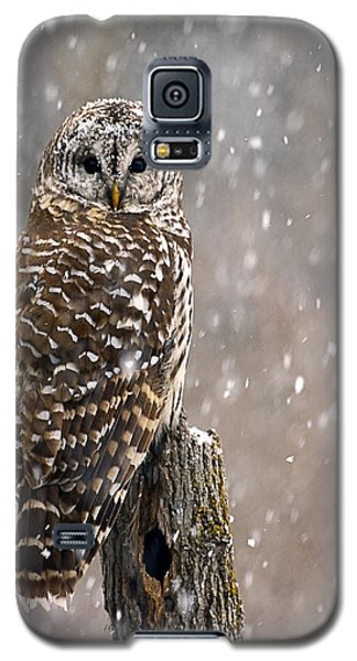 Barred Owl In A New England Snow Storm Galaxy S5 Case