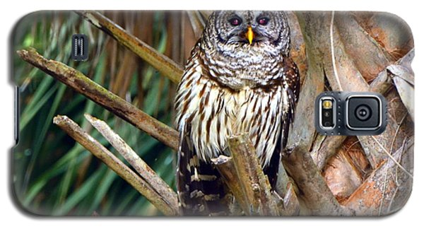 Barred Owl In Palm Tree Galaxy S5 Case