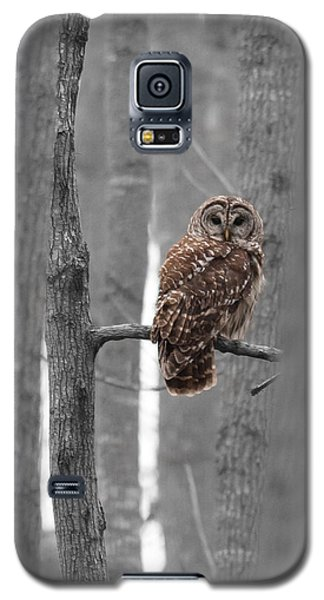 Barred Owl In Winter Woods #1 Galaxy S5 Case
