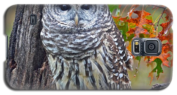 Galaxy S5 Case featuring the photograph Barred Owl by Rodney Campbell