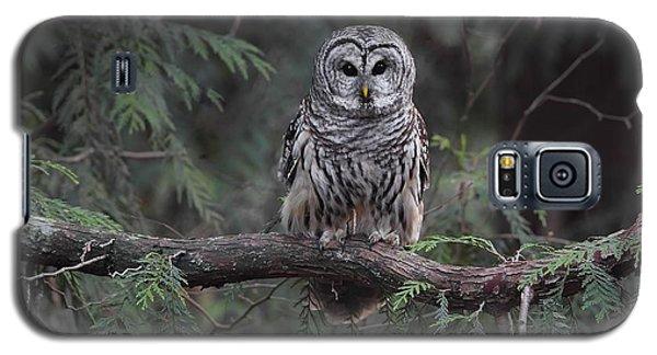 Barred Owl Stare Down Galaxy S5 Case