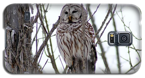 Galaxy S5 Case featuring the photograph Barred Owl by Steven Clipperton