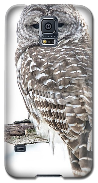 Barred Owl2 Galaxy S5 Case
