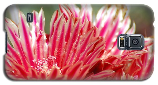 Barrel Cactus Flower Galaxy S5 Case