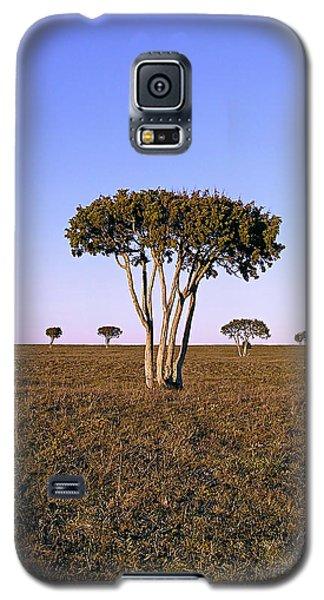Barren Tree Galaxy S5 Case