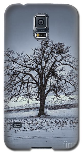 Barren Winter Scene With Tree Galaxy S5 Case