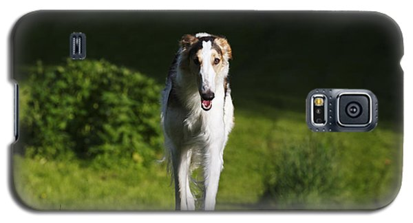 Barzoi Hound Running In A Woolf Like Posture Galaxy S5 Case