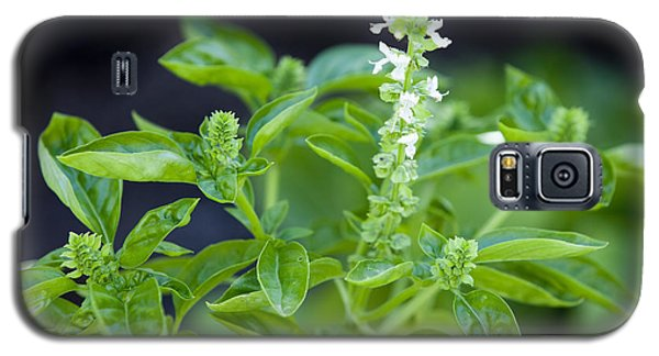 Basil With White Flowers Ready For Culinary Use Galaxy S5 Case by David Millenheft