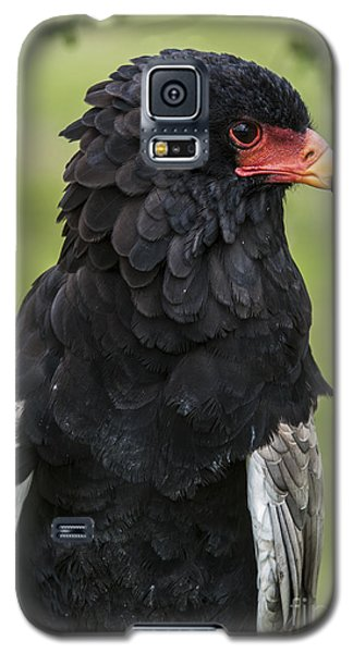 Bateleur 3 Galaxy S5 Case by Arterra Picture Library