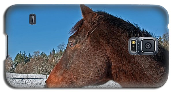 Bay Thoroughbred Horse Side View In Winter Galaxy S5 Case