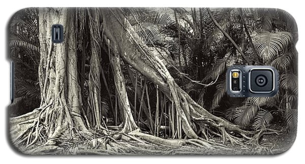 Strangler Fig Galaxy S5 Case