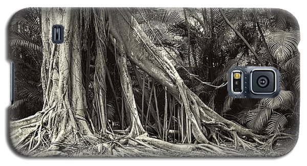 Strangler Fig Galaxy S5 Case